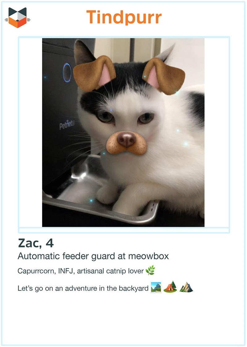 Cat - Tindpurr Pethiets Zac, 4 Automatic feeder guard at meowbox Capurrcorn, INFJ, artisanal catnip lover Let's go on an adventure in the backyard