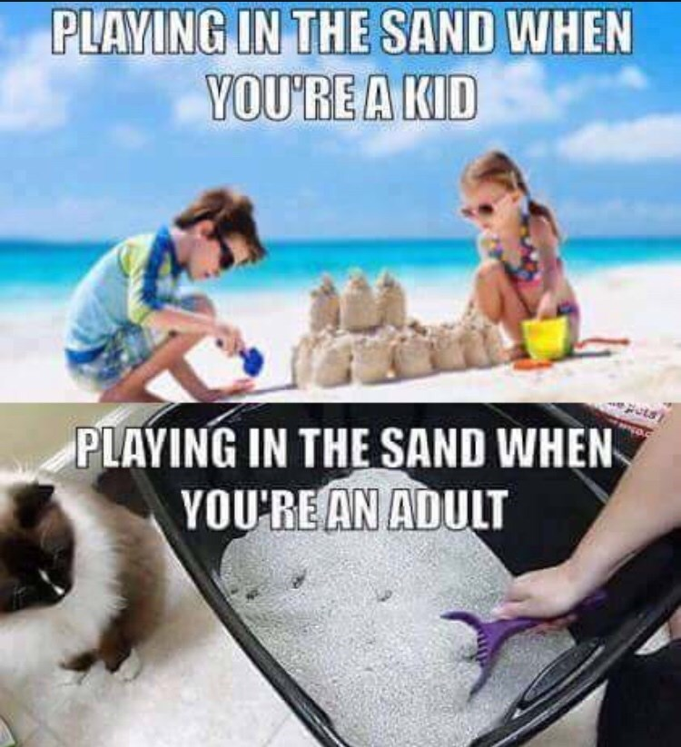 """Meme - """"PLAYING IN THE SAND WHEN YOU'RE A KID s PLAYING IN THE SAND WHEN YOU RE AN ADULT"""""""