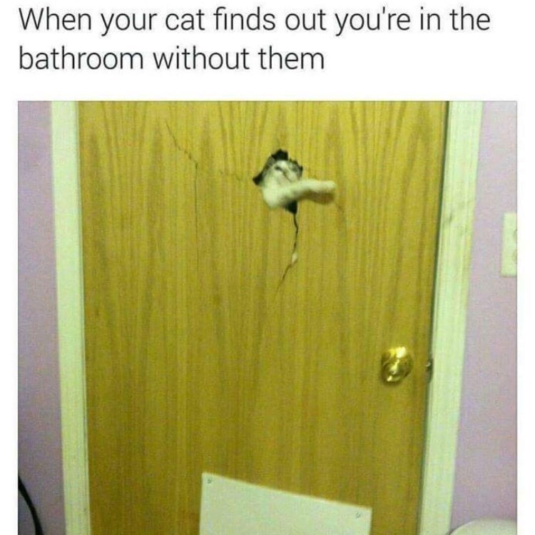 Product - When your cat finds out you're in the bathroom without them