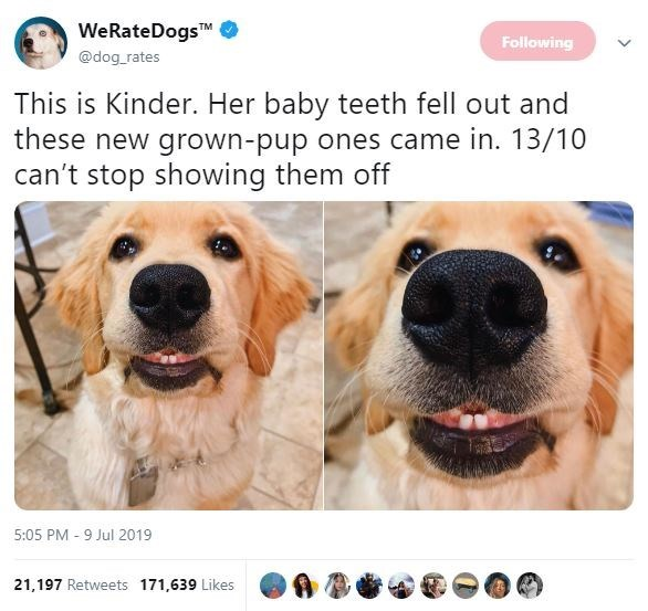Dog breed - WeRateDogsM @dog rates Following This is Kinder. Her baby teeth fell out and these new grown-pup ones came in. 13/10 can't stop showing them off 5:05 PM 9 Jul 2019 21,197 Retweets 171,639 Likes