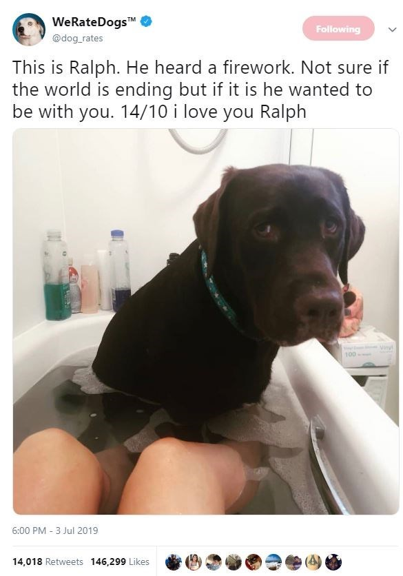 Dog - WeRateDogs TM Following @dog rates This is Ralph. He heard a firework. Not sure if the world is ending but if it is he wanted to be with you. 14/10 i love you Ralph Viny 100- 6:00 PM 3 Jul 2019 14,018 Retweets 146,299 Likes