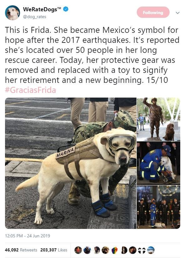 Dog - WeRateDogsTM @dog rates Following This is Frida. She became Mexico's symbol for hope after the 2017 earthquakes. It's reported she's located over 50 people in her long rescue career. Today, her protective gear was removed and replaced with a toy to signify her retirement and a new beginning. 15/10 #GraciasFrida MARINA 12:05 PM 24 Jun 2019 46,092 Retweets 203,307 Likes