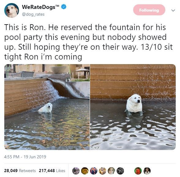 Adaptation - WeRateDogs TM Following @dog rates This is Ron. He reserved the fountain for his pool party this evening but nobody showed up. Still hoping they're on their way. 13/10 sit tight Ron i'm coming 4:55 PM 19 Jun 2019 28,049 Retweets 217,448 Likes