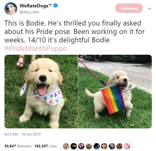 Dog - WeRateDogsTM @dog rates Following This is Bodie. He's thrilled you finally asked about his Pride pose. Been working on it for weeks. 14/10 it's delightful Bodie #PrideMonthPuppo 9:23 AM 18 Jun 2019 30,847 Retweets 182,307 Likes Pide