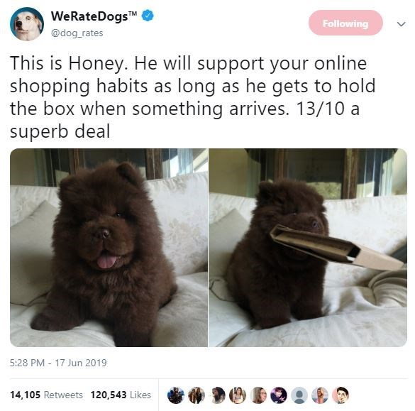 Dog - WeRateDogs TM Following @dog rates This is Honey. He will support your online shopping habits as long as he gets to hold the box when something arrives. 13/10 a superb deal 5:28 PM 17 Jun 2019 14,105 Retweets 120,543 Likes