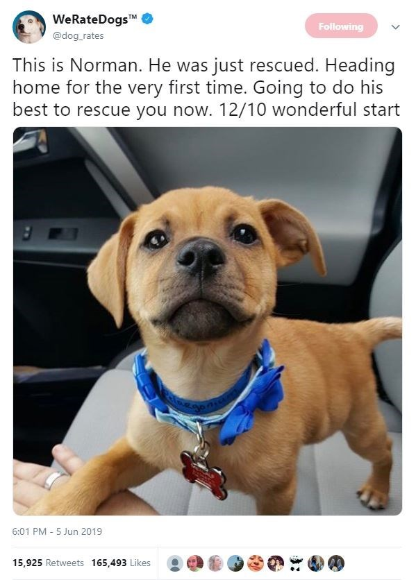 Dog - WeRateDogsTM Following @dog_rates This is Norman. He was just rescued. Heading home for the very first time. Going to do his best to rescue you now. 12/10 wonderful start 6:01 PM 5 Jun 2019 15,925 Retweets 165,493 Likes
