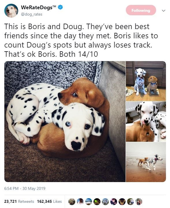 Dalmatian - WeRateDogsTM @dog rates Following This is Boris and Doug. They've been best friends since the day they met. Boris likes to count Doug's spots but always loses track. That's ok Boris. Both 14/10 6:54 PM 30 May 2019 23,721 Retweets 162,345 Likes