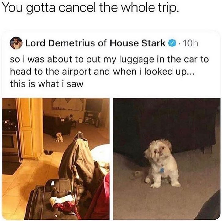 memes - Dog - You gotta cancel the whole trip. Lord Demetrius of House Stark 10h so i was about to put my luggage in the head to the airport and when i looked up... this is what i saw