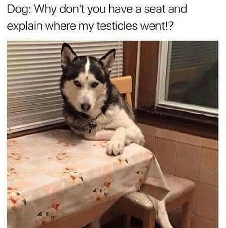 memes - Mammal - Dog: Why don't you have a seat and explain where my testicles went!?