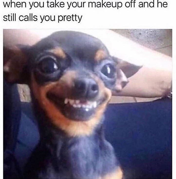 memes - Dog - when you take your makeup off and he still calls you pretty
