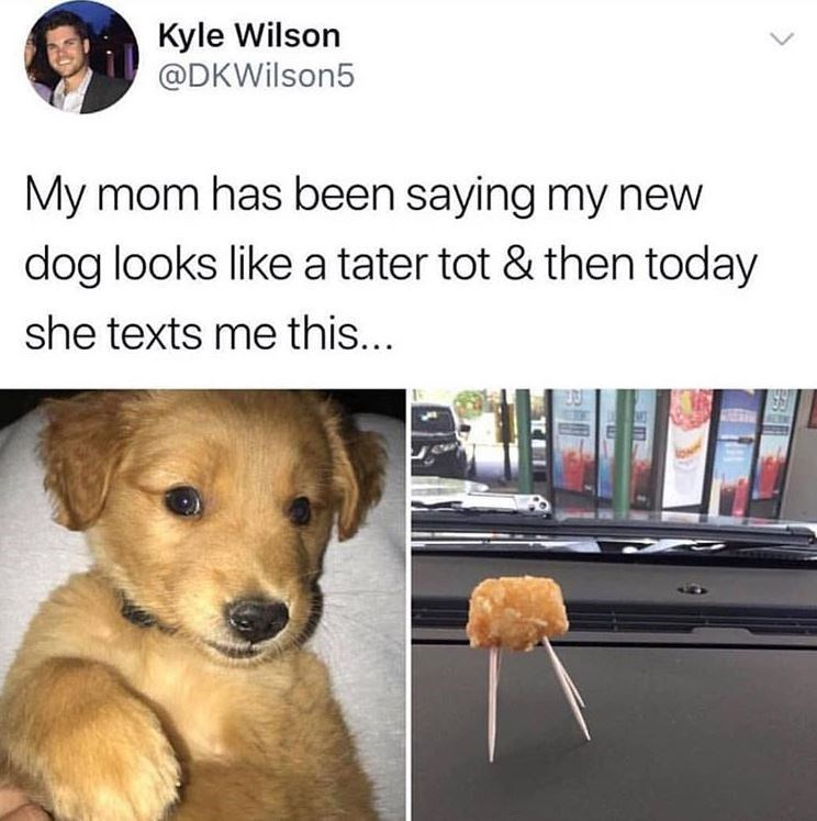 memes - Dog - Kyle Wilson @DKWilson5 My mom has been saying my new dog looks like a tater tot & then today she texts me this...