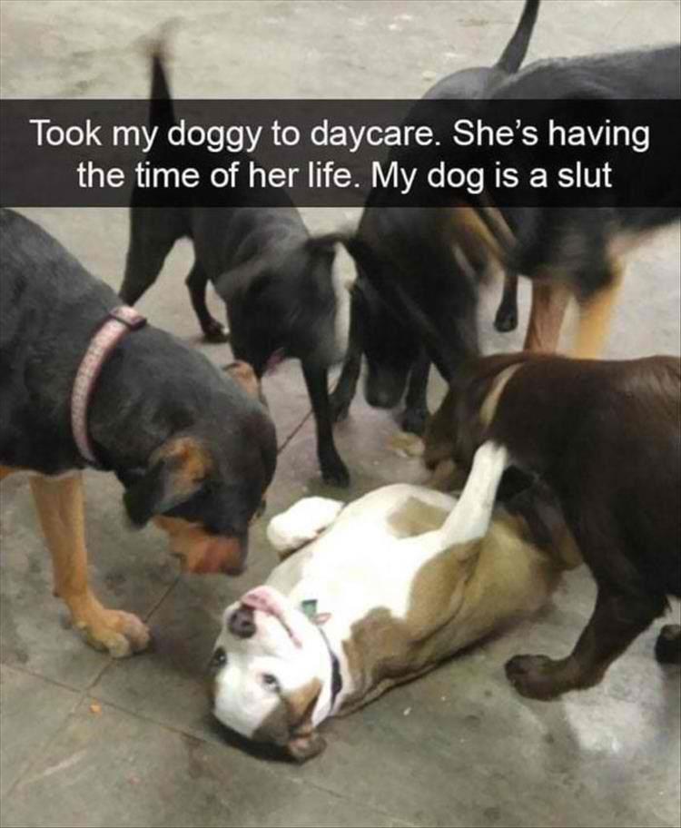 memes - Dog - Took my doggy to daycare. She's having the time of her life. My dog is a slut