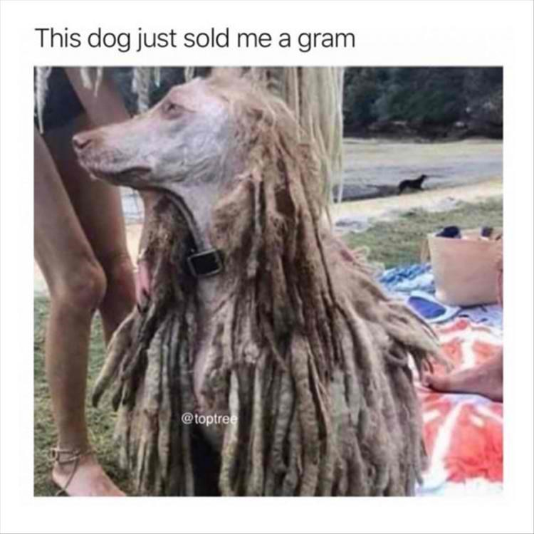 memes - Dog - This dog just sold me a gram @toptree