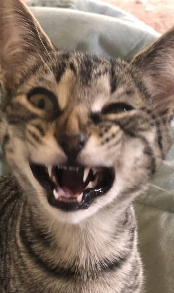 derpy animal - Cat
