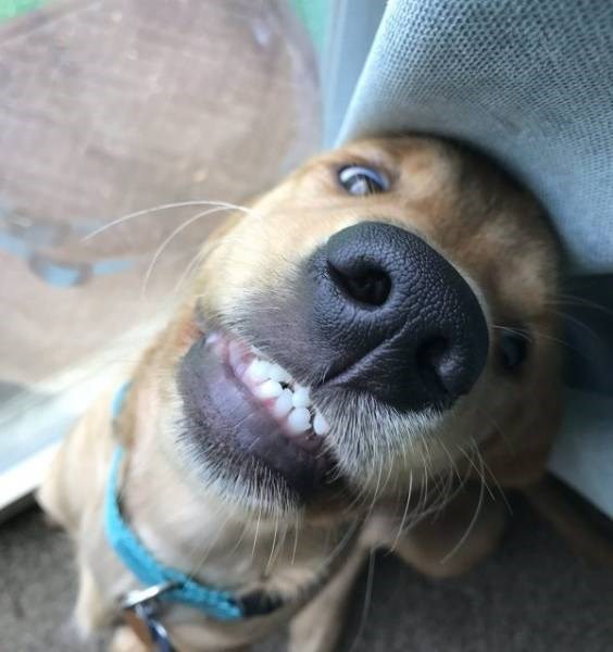 derpy animal - Dog breed