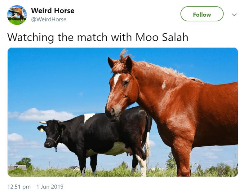 Vertebrate - Weird Horse Follow @WeirdHorse Watching the match with Moo Salah 12:51 pm 1 Jun 2019