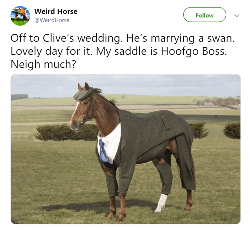 Horse - Weird Horse Follow @WeirdHorse Off to Clive's wedding. He's marrying a swan Lovely day for it. My saddle is Hoofgo Boss. Neigh much?