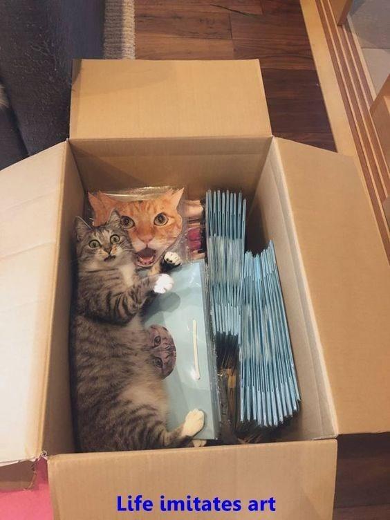 Cat - Life imitates art