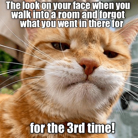 Cat - The look on your face when you walk into a room and forgot what you wentin there for for the 3rd time!