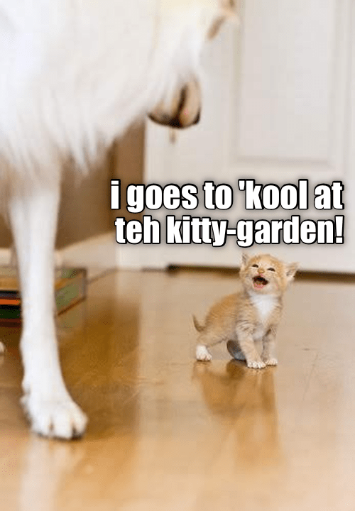 Photo caption - igoes to kool at teh kitty-garden!