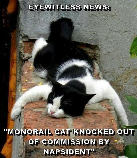 """Cat - EYEWITLESS NEWS """"MONORAL CAT KNOCKED OUT OF COMMISSION BY NAPSIDENT"""