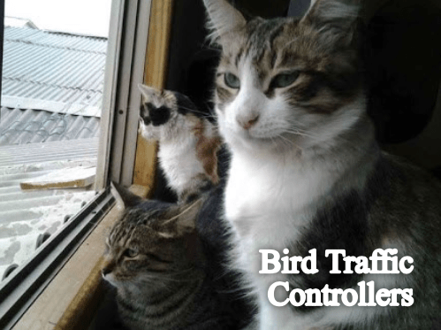 Cat - Bird Traffic Controllers