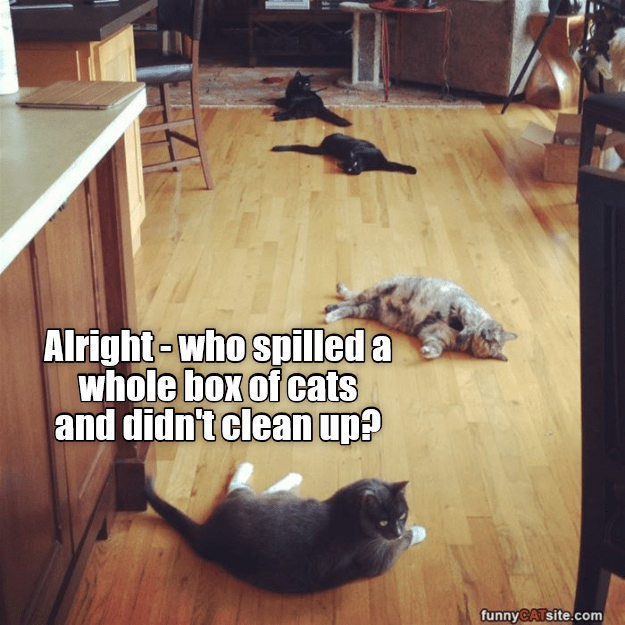 Floor - Alright-who spilled a whole box of cats and didn't clean up? funnyCATsite.com 41
