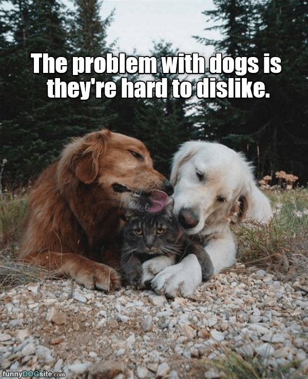 Mammal - The problem with dogs is they're hard to dislike. funnyDOGsite.com