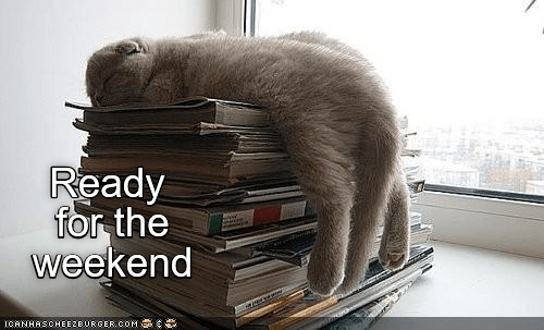 Cat - Ready for the weekend ICANHASCHEEZBURGER.OOM