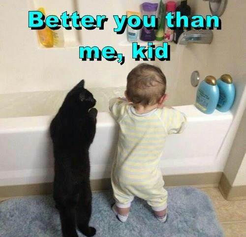 Cat - Better you than me, kid
