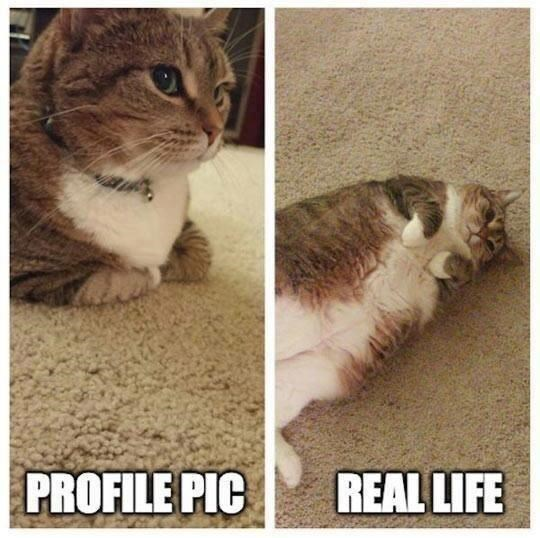 comparison between flattering profile pic of a cat and a tagged pic where it looks chubby