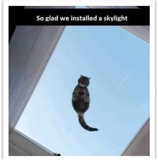 cat standing on a glass window like a skylight