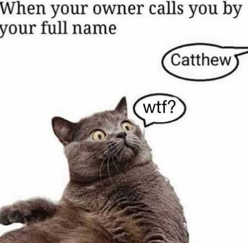 cat memes Cats funny - 9336423936