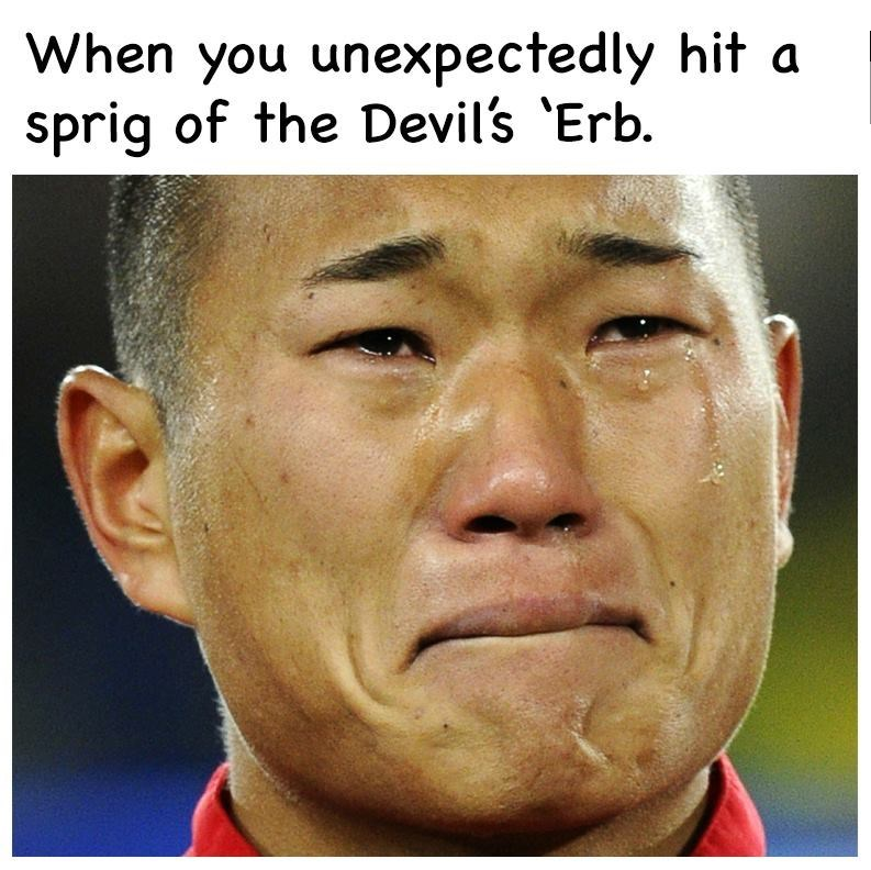 Face - When you unexpectedly hit a sprig of the Devil's 'Erb.