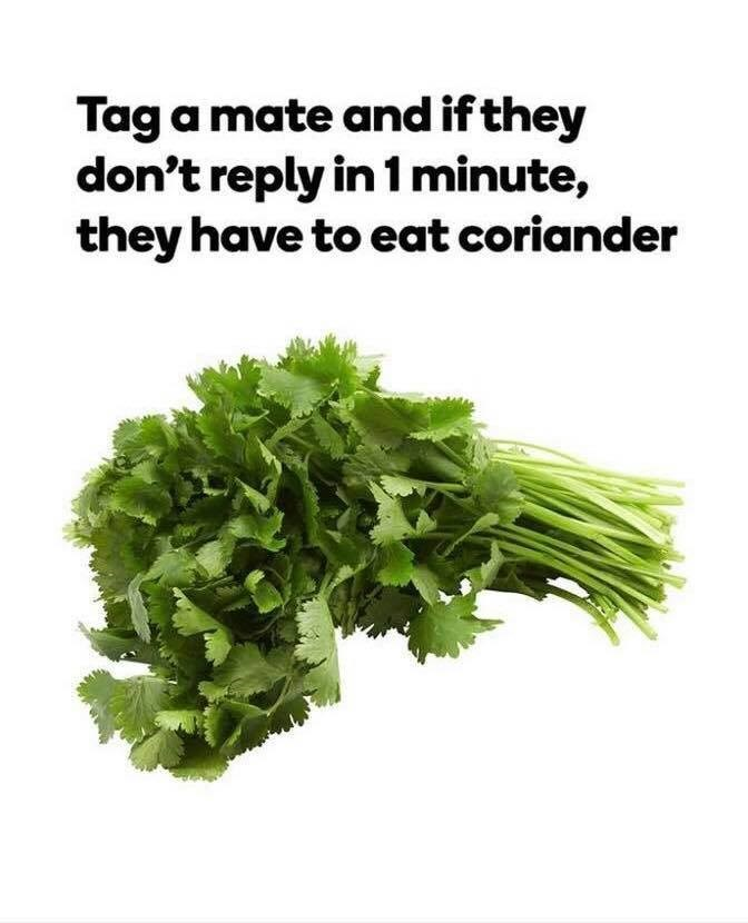 Leaf vegetable - Tag a mate and ifthey don't reply in 1 minute, they have to eat coriander