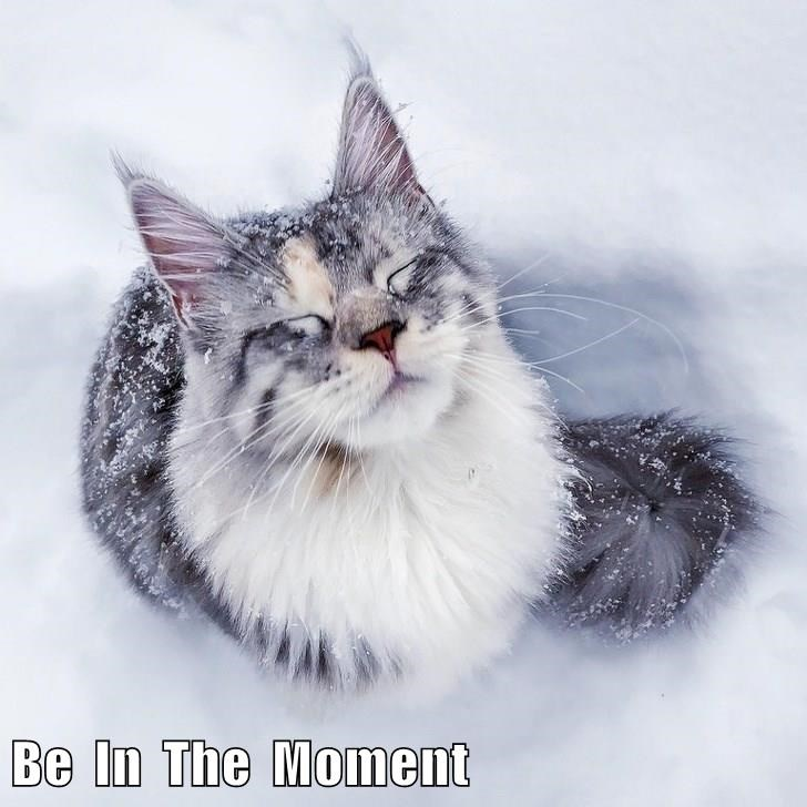 cat meme of being in the moment in the snow
