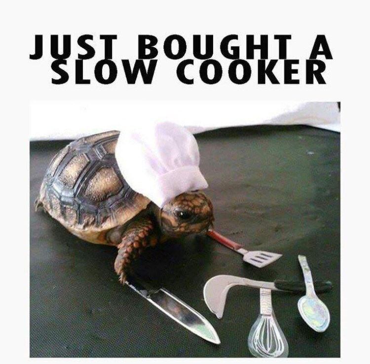 Tortoise - USI.BOUGHT A SLOW COOKER