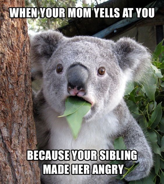 Koala - WHEN YOUR MOM YELLS AT YOU BECAUSE YOUR SIBLING MADE HERANGRY