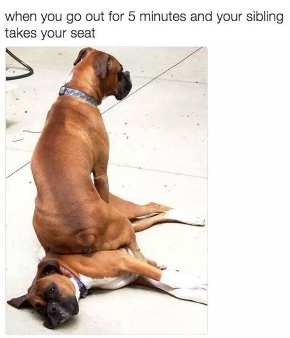 Dog - when you go out for 5 minutes and your sibling takes your seat