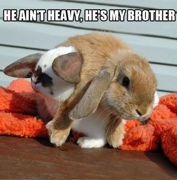 Rabbit - HEAINT HEAVY,HES MY BROTHER
