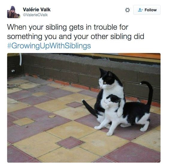 Cat - Valérie Valk Follow @ValerieCValk When your sibling gets in trouble for something you and your other sibling did #GrowingUpWithSiblings