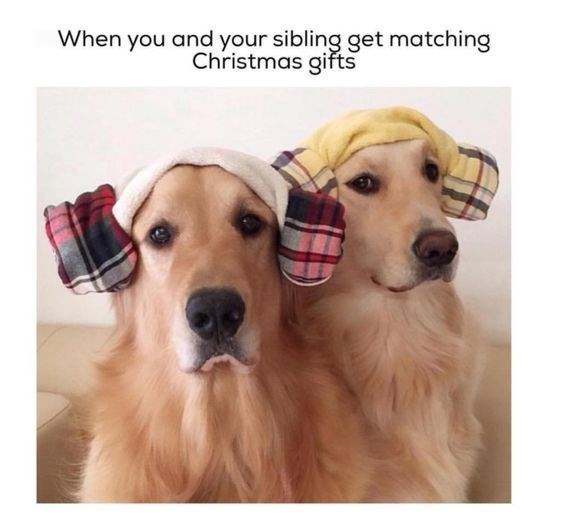 Dog - When you and your sibling get matching Christmas gifts