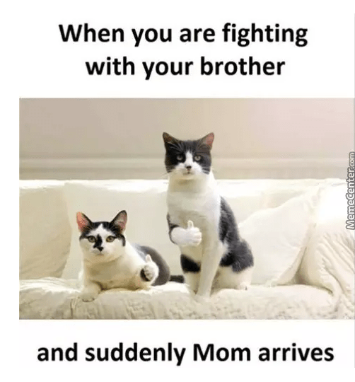Cat - When you are fighting with your brother and suddenly Mom arrives MemeCentersem