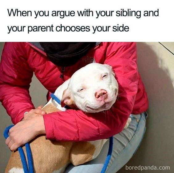 Dog breed - When you argue with your sibling and your parent chooses your side boredpanda.com
