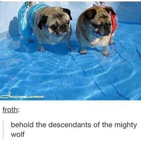 Dog - lhcaing moumt froth: behold the descendants of the mighty wolf