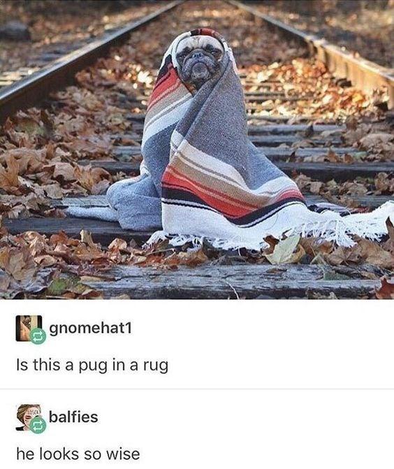 Footwear - gnomehat1 Is this a pug in a rug balfies he looks so wise