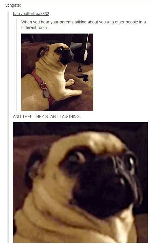 Pug - lychgate harrypotterfreak333 When you hear your parents talking about you with other people in a different room... AND THEN THEY START LAUGHING