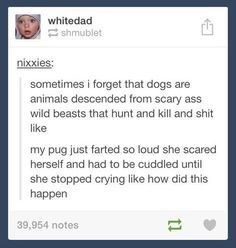 Text - whitedad shmublet nixxies sometimes i forget that dogs are animals descended from scary ass wild beasts that hunt and kill and shit like my pug just farted so loud she scared herself and had to be cuddled until she stopped crying like how did this happen 39,954 notes 1