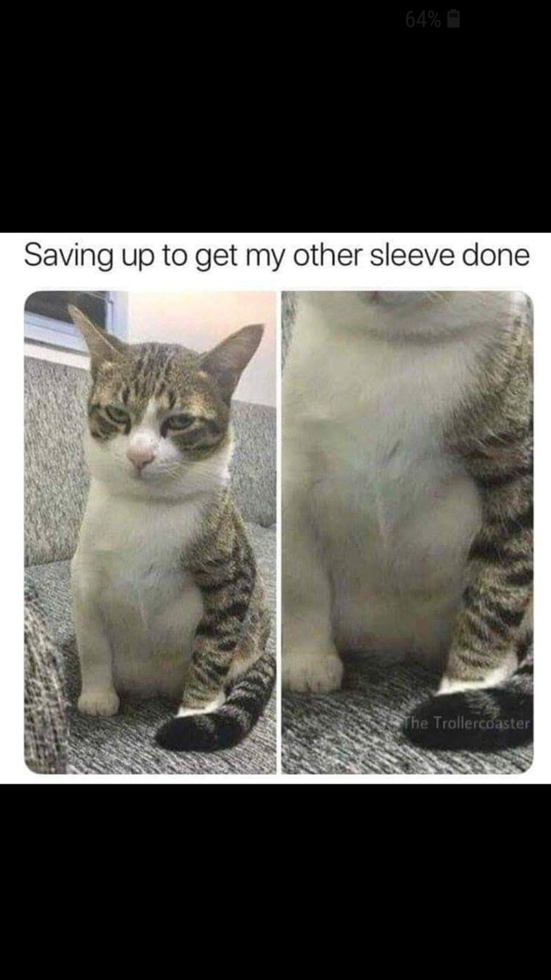 Cat - 64% Saving up to get my other sleeve done The Trollercoaster