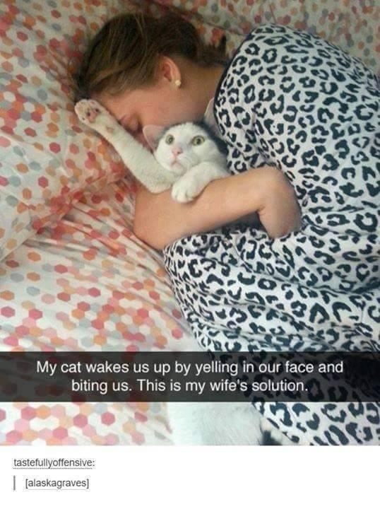 cat memes - 9336845824